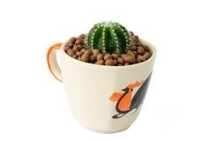 Kleine cactus in een kop van kippenpatroon Stock Foto's