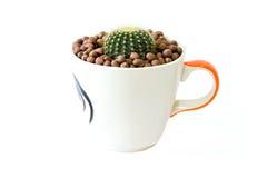 Kleine cactus in een kop van kippenpatroon Royalty-vrije Stock Foto's