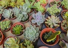 Kleine cactus in een pot Stock Foto's