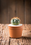 Kleine cactus in pot Stock Fotografie