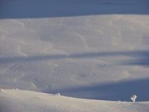 Kleine Dünen des Schnees Stockfotos