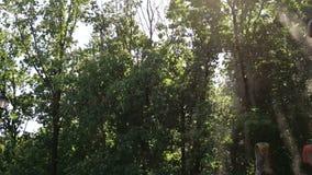 Kleine dalingen van water van fontein die in de wind onder bomen en zonlicht vliegen stock videobeelden
