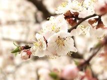 Kleine de lentebloemen bij muurwit Stock Afbeelding