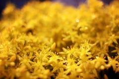 Kleine de lentebloemen op een gebied Stock Foto
