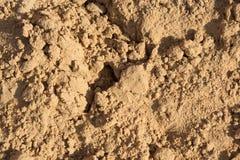 Kleine Dias auf der Oberfläche des Sandes Lizenzfreie Stockfotos