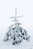 Kleine die pijnboomboom in sneeuw wordt behandeld Stock Foto
