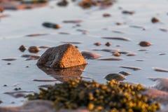 Kleine die rotsen op dichte omhooggaand van het strandzand worden verspreid stock afbeelding