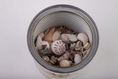 Kleine die slakshells uit het blik wordt bestrooid Shells in een metaalcontainer stock afbeeldingen