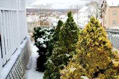 Kleine die struiken in sneeuw worden behandeld Stock Foto