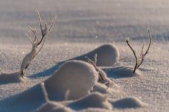 Kleine die takkensneeuw in Zweden wordt behandeld Stock Foto