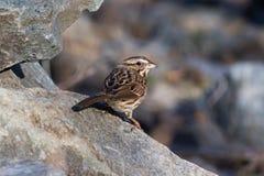 Kleine die vogel op rots wordt neergestreken Stock Fotografie