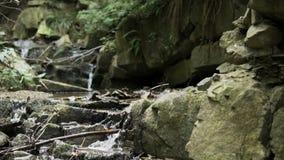 Kleine die waterval in bergen in langzame motie worden geregistreerd stock video