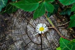 Kleine dode bloem in het hout! royalty-vrije stock foto's