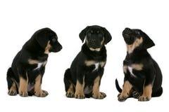 Kleine doggies Stock Foto's