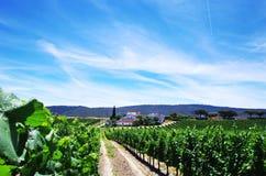 kleine dorp en wijngaarden, Sao Cristovao Stock Afbeelding