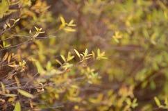 Kleine dunne gele de herfstbladeren stock fotografie