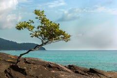 Kleine eenzame boom door de oceaan Stock Afbeeldingen