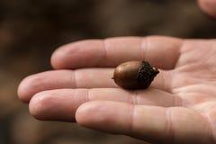 Kleine Eichel, Nahaufnahme auf einer Hand Lizenzfreie Stockfotografie