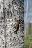 Kleine Eidechse auf einem Baum auf dem Hintergrund der Natur Lizenzfreies Stockbild