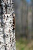 Kleine Eidechse auf einem Baum auf dem Hintergrund der Natur Stockfotos