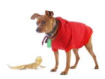 Kleine Eidechse und lächelnder Hund Stockfoto
