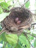 Kleine Eier stockfotos