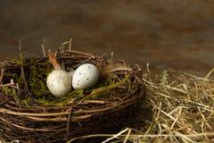 Kleine eieren in nest Royalty-vrije Stock Fotografie
