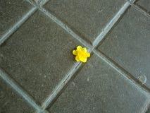Kleine einzige gelbe Blume auf der Pflasterung stockfotos