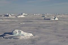 Kleine Eisberge eingefroren im Eis des südlichen Ozeans Stockfoto