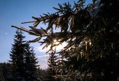 Kleine Eiszapfen mit dem Sonnenglänzen stockbilder