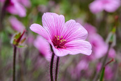 Kleine en breekbare bloem Royalty-vrije Stock Afbeeldingen