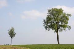 Kleine en grote boom Royalty-vrije Stock Fotografie
