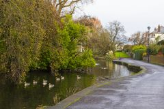Kleine Enten, die auf dem Fluss schwimmen, der Ward Park in Bangor-Grafschaft unten in Nordirland durchfließt Stockfoto