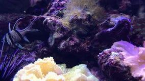 Kleine exotische vissen stock video