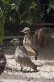 Kleine exotische vogels Stock Afbeeldingen