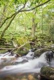 Kleine Fälle in Wald Stockfotografie