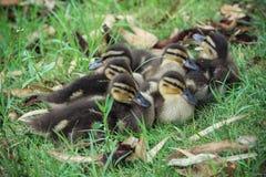 Kleine Familie Lizenzfreies Stockfoto