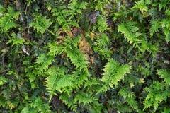 Kleine Farne wachsen auf einem Baum Stockfoto