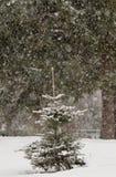 Kleine Fichten im Schneefall lizenzfreie stockbilder