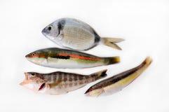 Kleine Fische Stockbilder