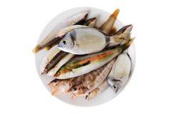 Kleine Fische auf einem Teller Lizenzfreie Stockbilder