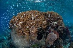 Kleine Fische und weiche Korallen Stockbilder