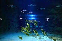 Kleine Fische Unterwasser Stockfotos
