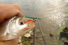 Kleine Fischhinterwelle Lizenzfreie Stockfotos