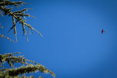 Kleine Fläche im Himmel Lizenzfreie Stockfotografie