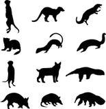 Kleine Fleisch fressende Tiere und Anteaters Stockfoto