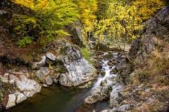 Kleine Flussschlucht mit Wasserfall und Herbstlaub Stockfotografie