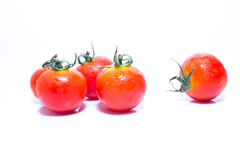 Kleine frische Tomate Stockfoto