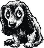Kleine geïsoleerde hond Stock Afbeeldingen
