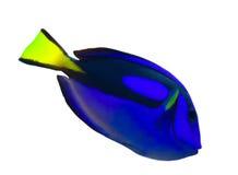 Kleine geïsoleerdew blauwe vissen Stock Foto's